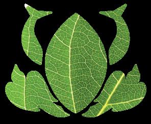 thrivelogos-photographic-leaf